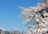 1000本桜の里を目指して